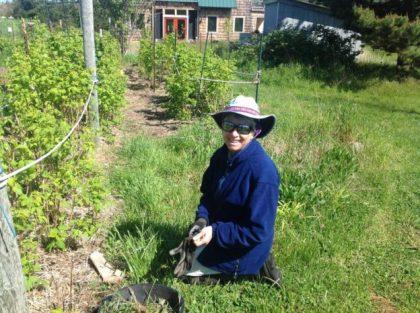 Work in the Raspberries